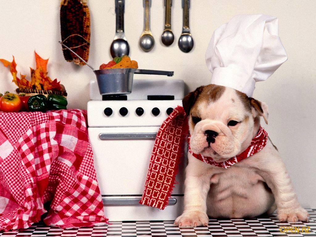 Смешные картинки для кухни