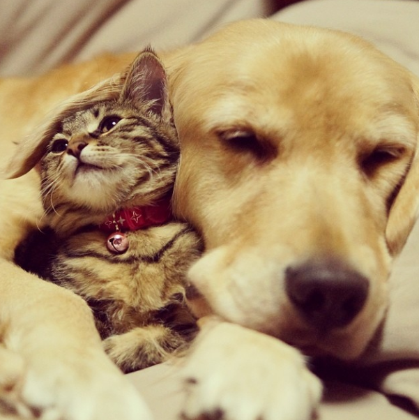 Dogs and cats in love