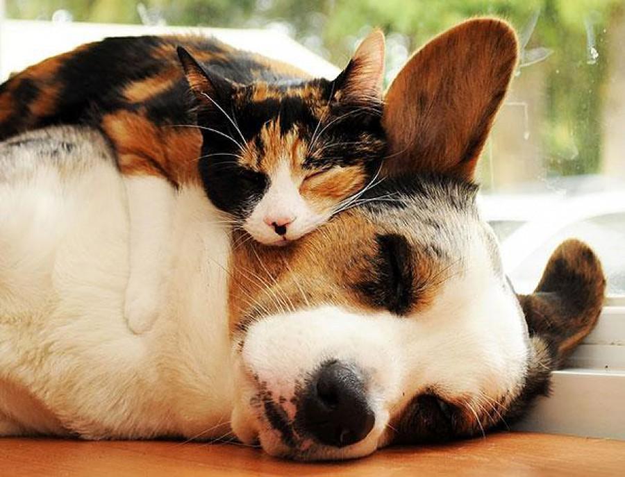 sleepy animals funny