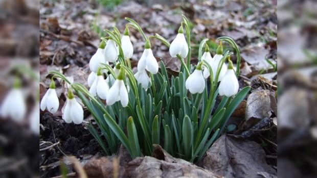 Народные приметы на март помогут нам узнать заранее, каким будет первый месяц весны