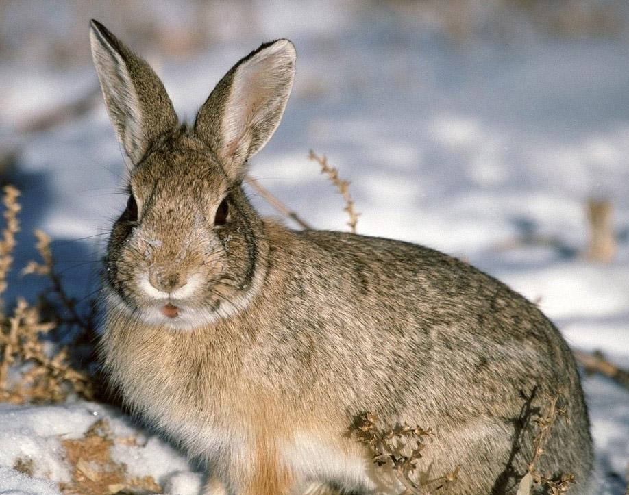 Народные приметы: встретить серого зайца на Архиппа – к теплу