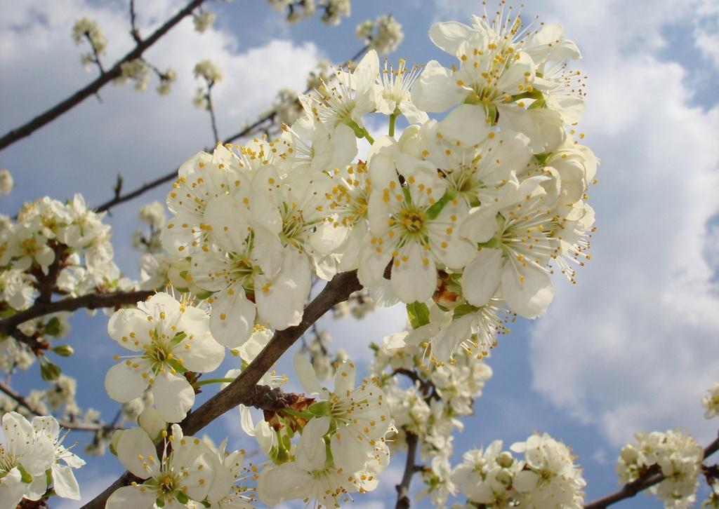 Народные приметы на апрель помогут нам узнать, каким будет начало нового года