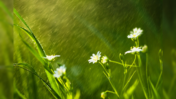 Погода в украине в киеве завтра дождь