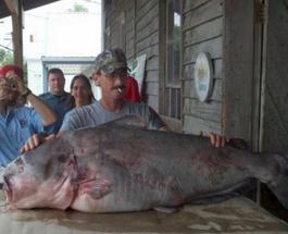 Крупная рыба: фото самых больших уловов