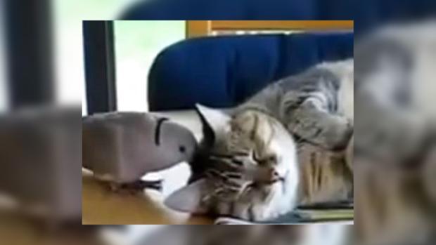 у кошки воняет изо рта что делать
