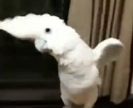 Смешные ролики: мегапозитивный попугай отжигает под хит PSY Gangnam Style