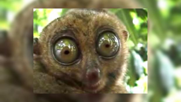 фото глаза смешные