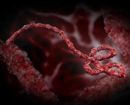 Лихорадка Эбола: Ученые разработали тест, который за 15 минут покажет есть ли смертельный вирус в организме