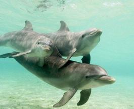 В Индии дельфины признаны личностями, а потому дельфинарии решили запретить