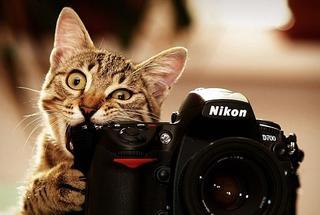 Фото животных, любящих быть на месте фотографа