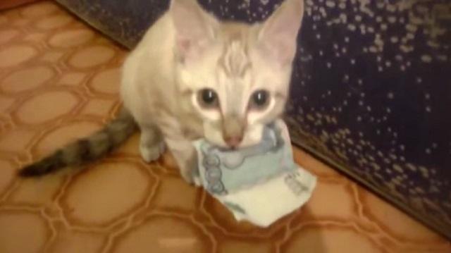 Кот переживает за рубли и ворует их для сохранности