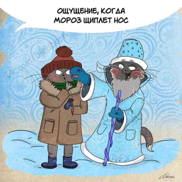 могут смешные картинки про холод мороз с надписью рози выросла