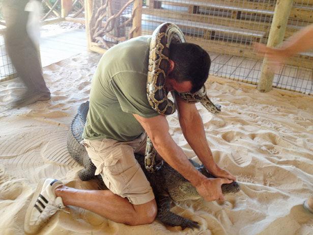 Владимир Кличко бьется с питоном и крокодилом