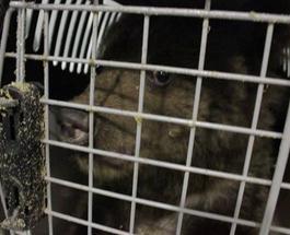 Косолапая контрабанда: в ручной клади в Борисполе нашли медвежат
