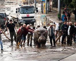 Наводнение в Тбилиси: число жертв выросло до 17, а ущерб – до $45 млн