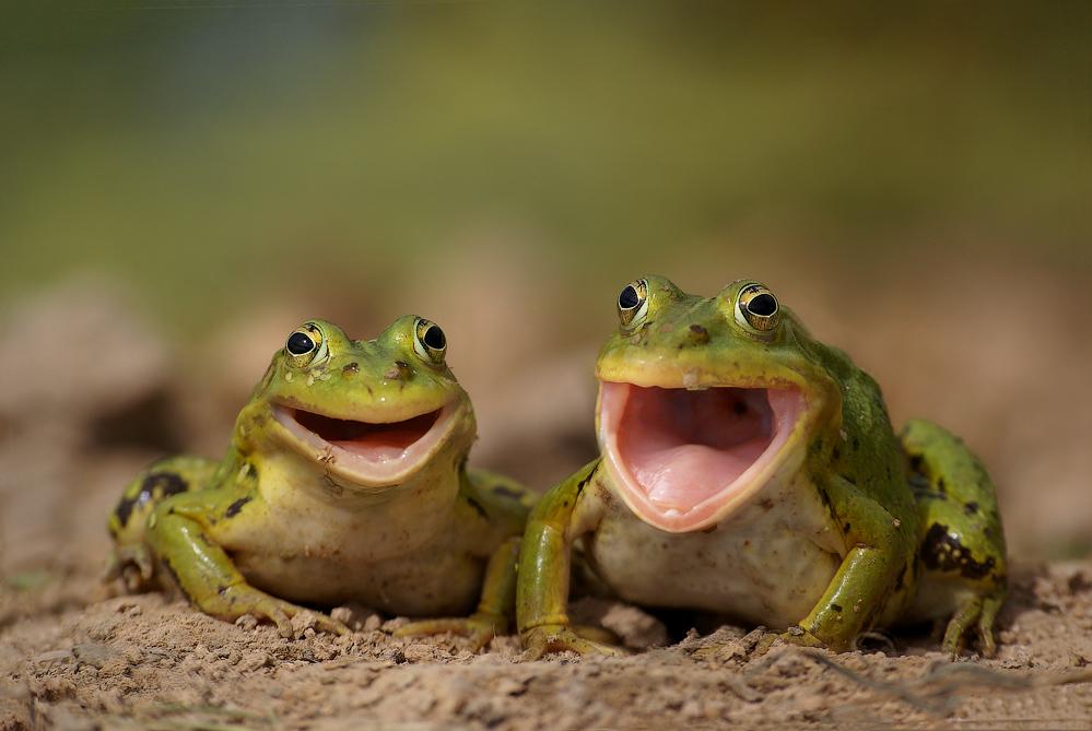 дохлые лягушки - сырьё для АСД