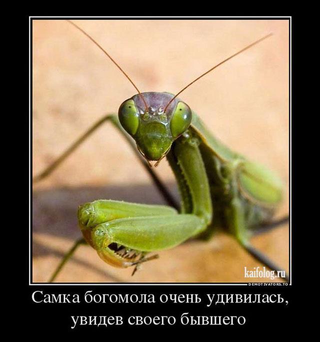 Свадебные, смешные картинки про насекомых демотиваторы