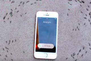 iPhone загадочно влияет на муравьев: то, что делают насекомые во время звонка, заставляет задуматься
