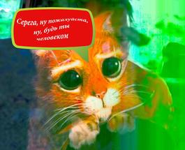"""""""Зато от чистого сердца!"""": водитель из Новокузнецка попытался дать взятку медом"""
