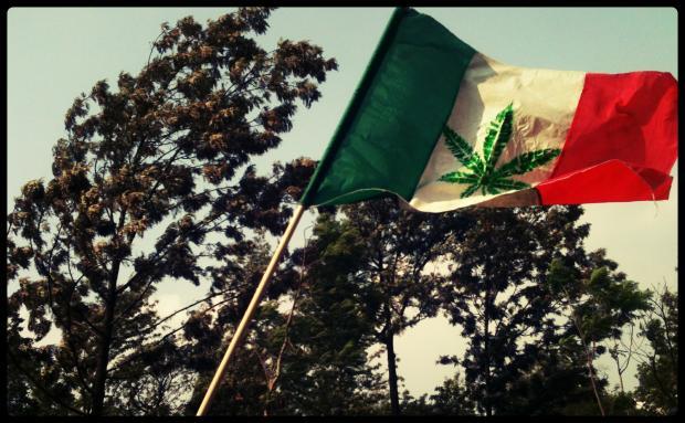 Марихуана мексики пересушил марихуану