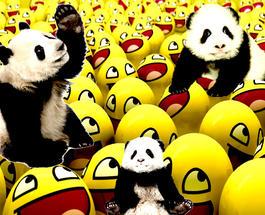 Смешное видео: панда-хулиганка взорвала сеть
