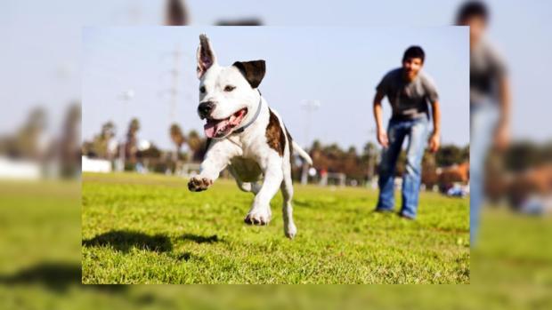 Первые в мире щенки, выведенные методом ЭКО, родились в США
