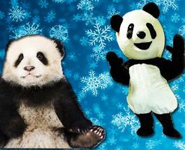 """""""Вот зачем ему это надо?"""": американец переоделся в """"панду Тян-Тян"""" и точно так же вывалялся в снегу"""