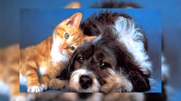 Ученые выяснили, кто лучше для человека - кошка или собака