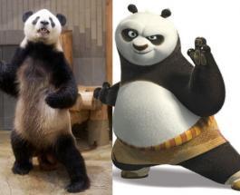 """Японцы обнаружили в зоопарке """"кунг-фу панду"""""""