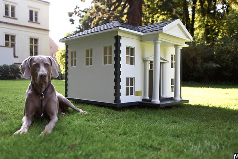 шифрования картинка собака и дом поколение