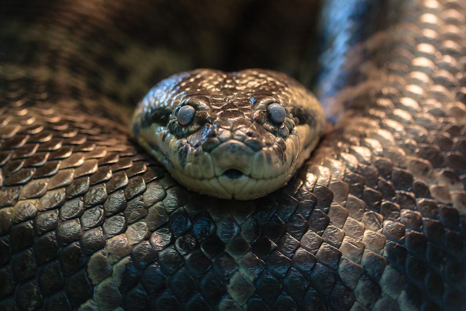 деталь картинки длинная змея подорожника продаются