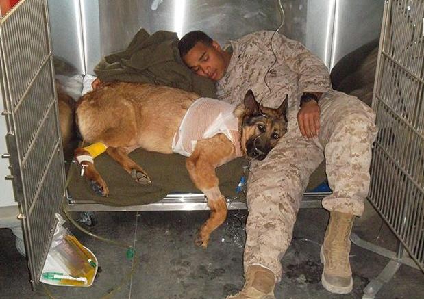 Это надо знать! ИНТЕРЕСНЫЕ факты о собаках - Страница 3 57055b6ab23c1
