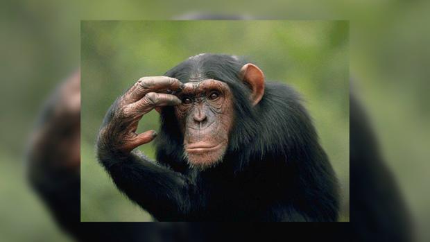 21 млн. лет назад обезьяны проплывали 160 километров— палеонтологи