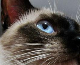 Скончался самый старый в мире кот Скутер