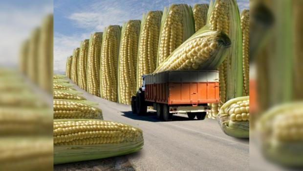 Ученые уверяют, что еда, созданная методами генетической инженерии, безопасна