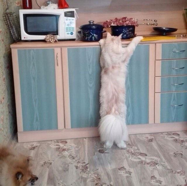 коты приколисты картинки отлично