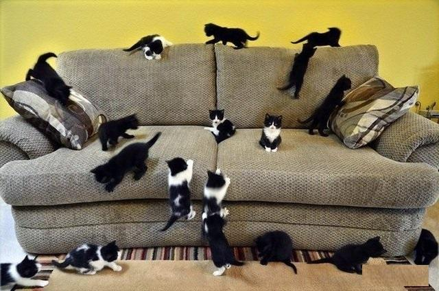 Диван коту