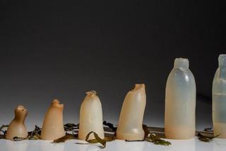 Невероятно, но факт: студент создал эко-бутылку будущего из водорослей