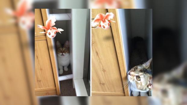 Картинки кошек покемонов