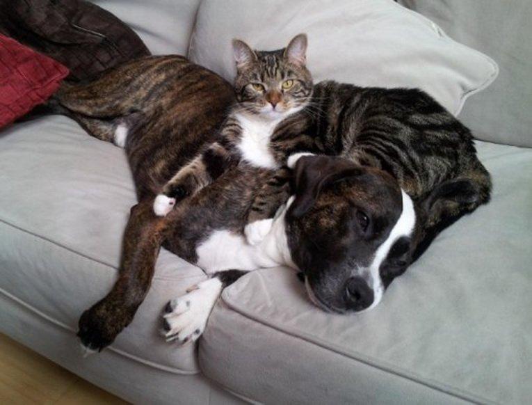 Пес кот хозяин