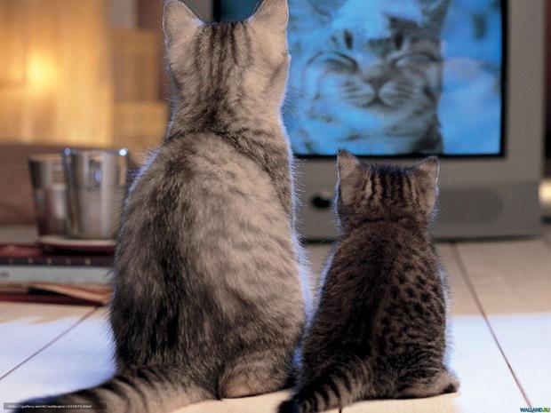 Ученые отыскали отличие между котами икошками
