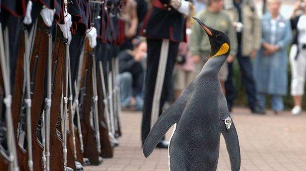 Пингвин изшотландского зоопарка стал генералом Королевской гвардии Норвегии