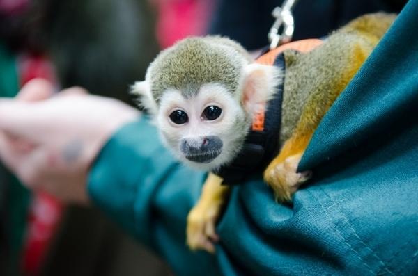 Втюменском зоопарке кошка «усыновила» обезьянку