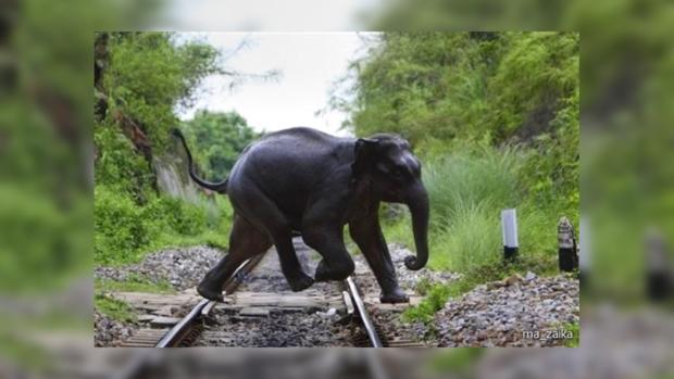 Три слона вИндии погибли вжелезнодорожной трагедии