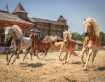 На выходных под Киевом пройдет фестиваль конных боевых искусств «Скифы»