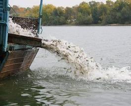 На Днепропетровщине начали восстанавливать экологический баланс реки Днепр