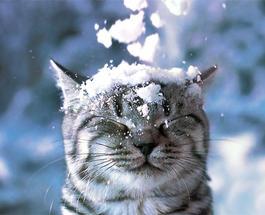 Харьков засыпало первым снегом