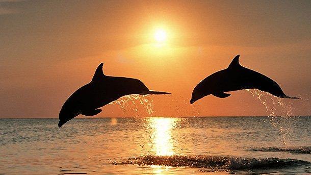 Ученые: за50 лет 40% Черного моря стали непригодными для жизни