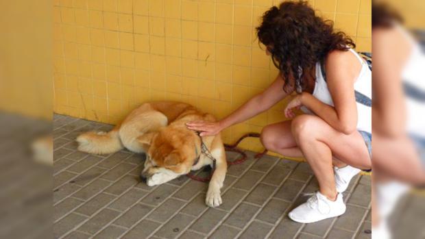 Собачка неделю ожидала хозяйку накрыльце клиники — Современная Хатико
