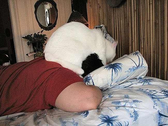 Почему собака спит на голове хозяина